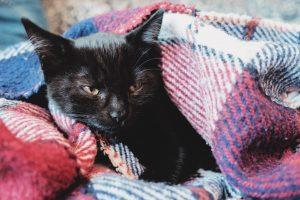 Svart katt inkrupen i en filt