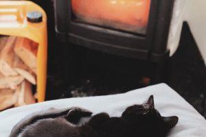 Katt på kudde framför en brasa