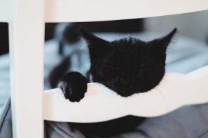 Sovande katt med huvudet vilandes på en stolsrygg