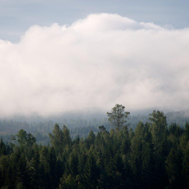 Skog, låg dimma, fin utsikt