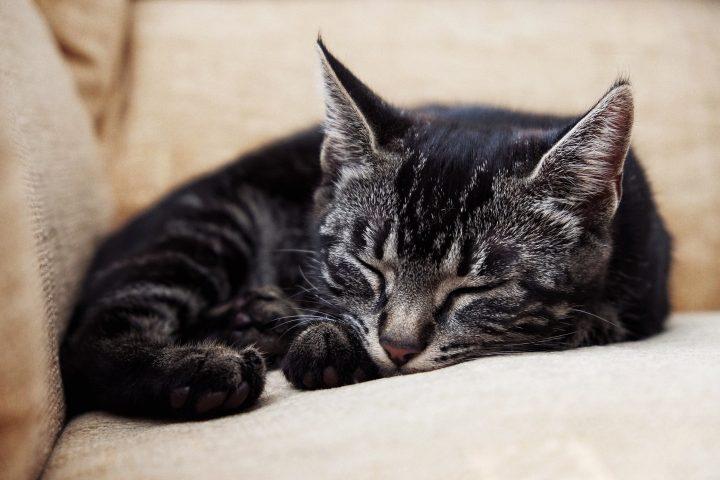 Liten katt sovandes i soffa.