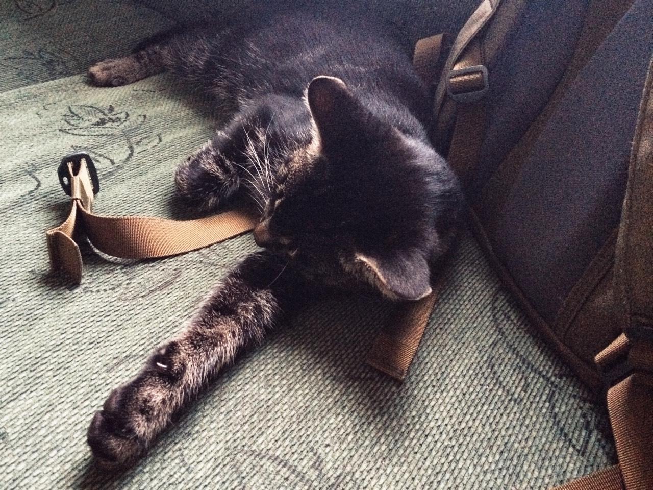 Sovande katt på soffa