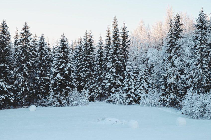 Snöig skog med snöklädd åker i förgrunden