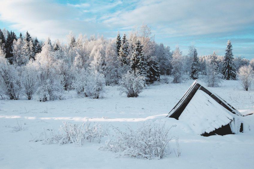 En rasad lada på snöklädd åkersmark med skog i bakgrunden