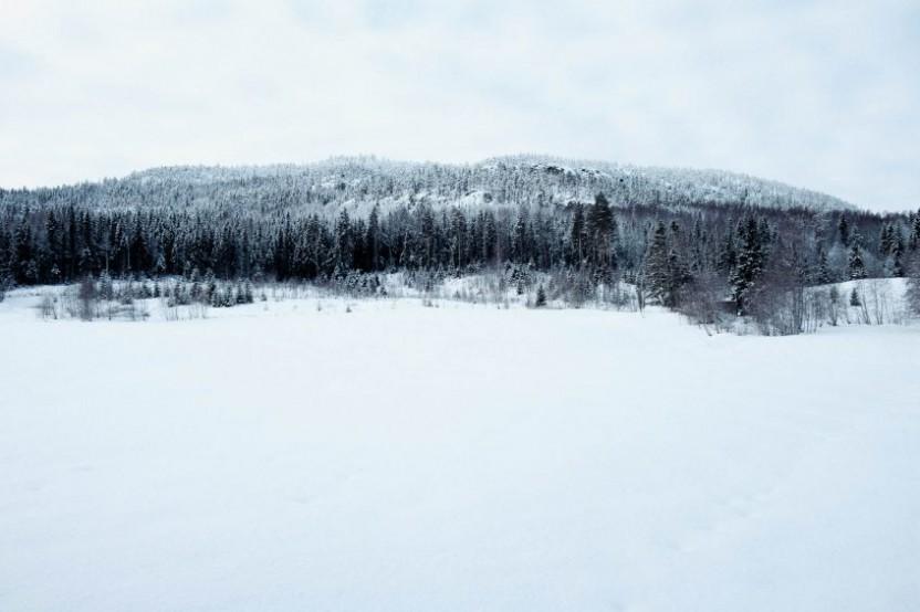 Ett snötäckt fält i förgrund med skog och mindre berg i bakgrund